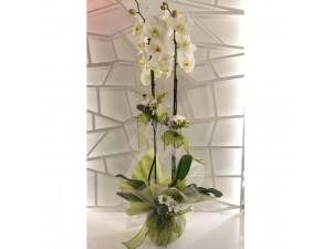 Özel Orkide Arajmanı